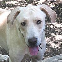 Adopt A Pet :: Clyde - Godley, TX