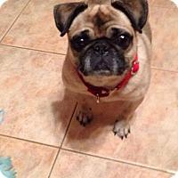 Adopt A Pet :: ChanChan - Pierrefonds, QC