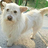 Adopt A Pet :: Kobi - Fairfax, VA