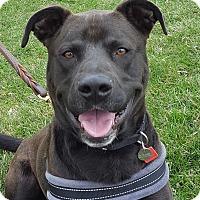 Adopt A Pet :: Hershey - Grayslake, IL