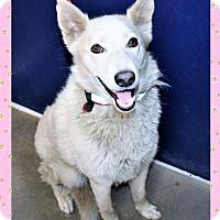 Adopt A Pet :: Kita - San Jacinto, CA