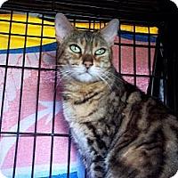 Adopt A Pet :: Mya - Lantana, FL