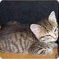 Adopt A Pet :: Eyore - Richmond, VA