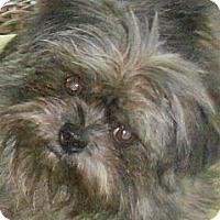 Adopt A Pet :: JOJO - ADOPTION PENDING! - Little Rock, AR