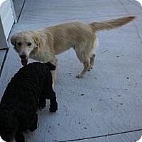 Adopt A Pet :: Shiloh - Wallaceburg, ON