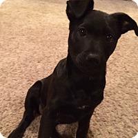 Adopt A Pet :: Opal - Randolph, NJ