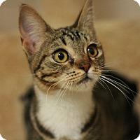 Adopt A Pet :: Paris - Canoga Park, CA