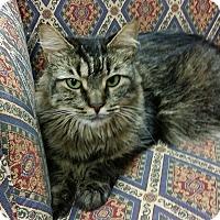 Adopt A Pet :: Charlotte - Naples, FL