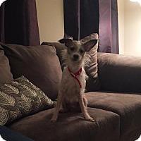 Adopt A Pet :: Hubert - Centreville, VA