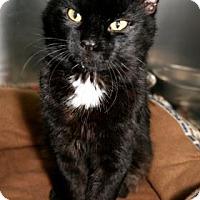 Adopt A Pet :: Hildago - Bradenton, FL