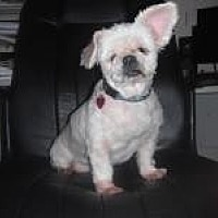 Adopt A Pet :: Blanche (FL) - Gainesville, FL