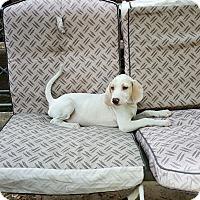 Adopt A Pet :: Hudson - Byhalia, MS