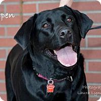 Adopt A Pet :: Aspen - Clovis, CA