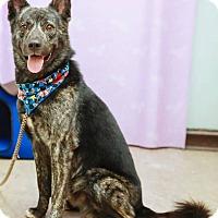 Adopt A Pet :: Dolda - Castro Valley, CA