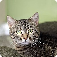 Adopt A Pet :: Medley - Chicago, IL