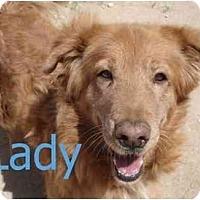 Adopt A Pet :: Lady - Gilbert, AZ