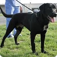 Adopt A Pet :: Hooper - Lewisville, IN