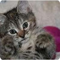 Adopt A Pet :: Lindy - Arlington, VA