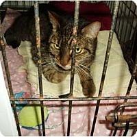 Adopt A Pet :: Tigger - Westfield, MA