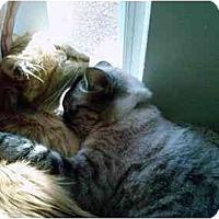 Adopt A Pet :: Juicy - Davis, CA