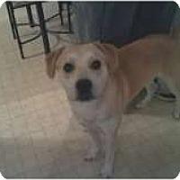 Adopt A Pet :: Sammy - Staunton, VA