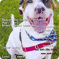Adopt A Pet :: Cyrus what a great dog - Sacramento, CA