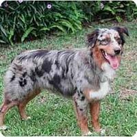 Adopt A Pet :: Smokey - Orlando, FL