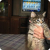 Adopt A Pet :: Rocky - Westfield, MA