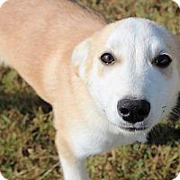 Adopt A Pet :: Fisher - Brattleboro, VT