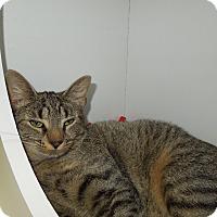 Adopt A Pet :: Josie - Medina, OH