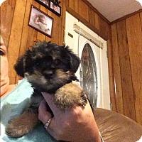 Adopt A Pet :: Waylon - Hazard, KY