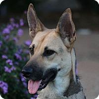Adopt A Pet :: Evie - San Diego, CA