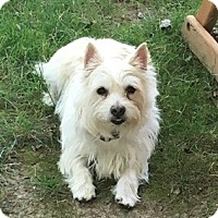Adopt A Pet :: Buddy - Beavercreek, OH