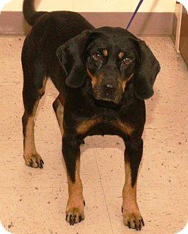 Coonhound Mix Dog for adoption in McDonough, Georgia - Parsnip