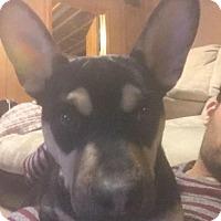 Adopt A Pet :: Lucky - Charlotte, NC
