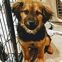 Adopt A Pet :: Derek(ADOPTED!) - Chicago, IL