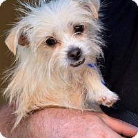 Adopt A Pet :: Flicker - Abilene, TX