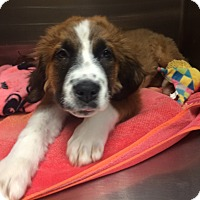 Adopt A Pet :: Melanie - Oak Ridge, NJ