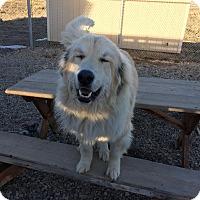 Adopt A Pet :: Big Ed - Gunnison, CO