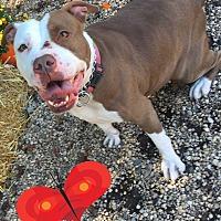 Adopt A Pet :: TABITHA - Tinton Falls, NJ