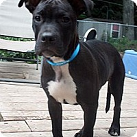 Adopt A Pet :: Buster II - Cary, IL