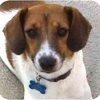 Adopt A Pet :: Cooper in Houston - Houston, TX