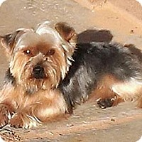 Adopt A Pet :: Bowen - Phoenix, AZ