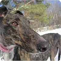Adopt A Pet :: Alysa (Craigie Alysa) - Chagrin Falls, OH