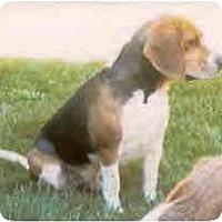 Adopt A Pet :: Jackson - Portland, OR