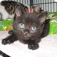 Adopt A Pet :: Fern - Shelton, WA