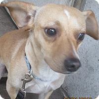 Adopt A Pet :: Mickey - Jacksonville, FL