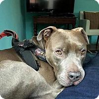 Adopt A Pet :: ERNIE (Courtesy Post) - LOS ANGELES, CA