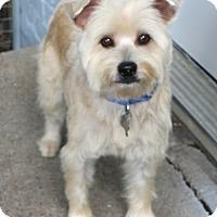Adopt A Pet :: Dryden - MEET ME - Norwalk, CT