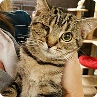 Adopt A Pet :: Cheetah - Delmont, PA